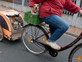Top 9 Best Dog Bike Trailer Reviews In 2020